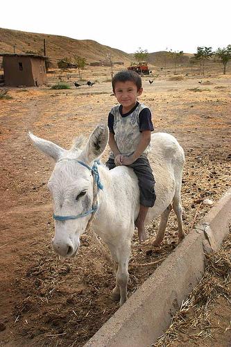 riding donkey