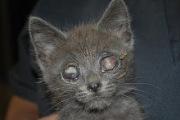 blind cat homer