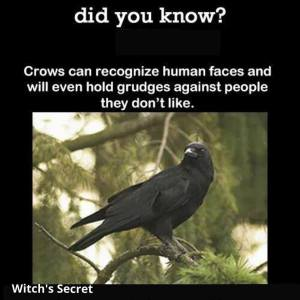 Crow did you know