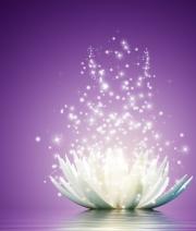 magic lotus cropped