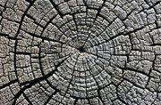 weathered tree growth rings Michael Gabler