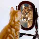 cat-in-mirror